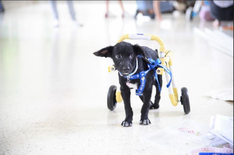 ภาพบรรยากาศ อบรมการทำวีลแชร์เพื่อสัตว์พิการ ครั้งที่ 29